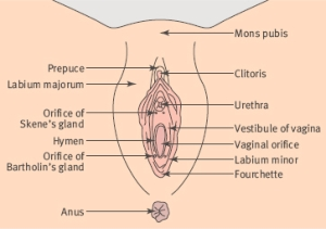 vulvovaginal_diseases